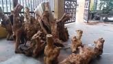 """Đổ xô săn """"báu vật"""" vườn quốc gia Phong Nha – Kẻ Bàng"""