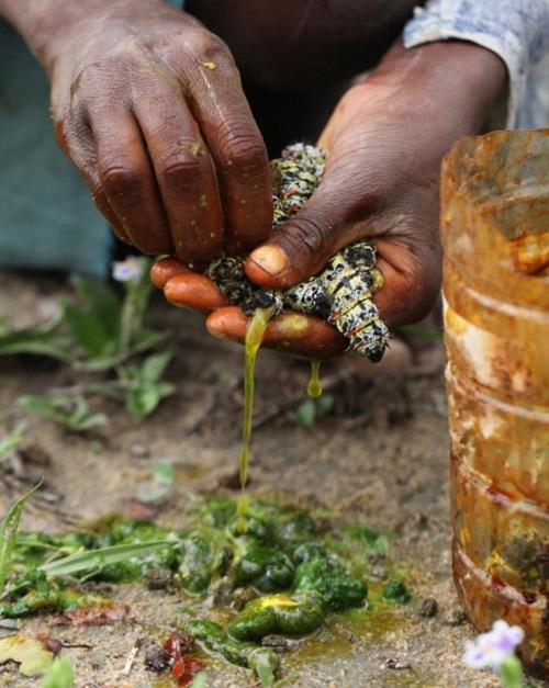 Nổi da gà với snack sâu giòn - đặc sản kinh dị của Zimbabwe - 5