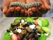 Ẩm thực - Nổi da gà với snack sâu giòn - đặc sản kinh dị của Zimbabwe