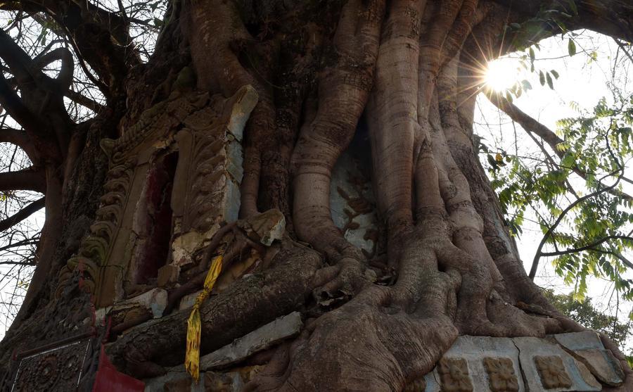 Bí ẩn trong ngôi chùa lạ nằm dưới gốc đa cổ thụ ở TQ - 3