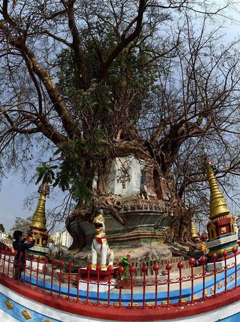 Bí ẩn trong ngôi chùa lạ nằm dưới gốc đa cổ thụ ở TQ - 4