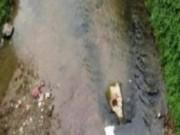 An ninh Xã hội - Hoảng hồn phát hiện khúc xương chân trôi trên suối