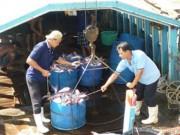 Thị trường - Tiêu dùng - Thiếu cá tra nguyên liệu, doanh nghiệp gặp khó