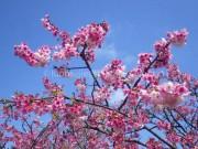 Du lịch - Đến Đài Loan check-in hoa anh nào nở sớm ngay thôi!