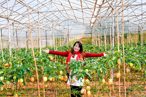 Trải nghiệm mới với nông trại Đà Lạt - 3