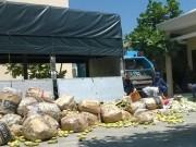 Thị trường - Tiêu dùng - Tiêu hủy ngay 66 tấn xoài nhập lậu từ Campuchia