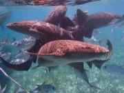 Thế giới - Video: Thợ lặn liều lĩnh rút dao găm trên đầu cá mập