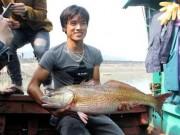 """Tin tức trong ngày - Cá vàng óng ánh ở Nghệ An: Chủ nhân """"đứt ruột"""" bán cá giá bèo"""