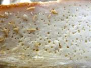 Phát hoảng với món phô mai có hàng nghìn con dòi ngọ nguậy