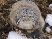 Phi thường - kỳ quặc - Nhặt mèo con về nuôi, không ngờ lại là con khác