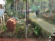 Ấn Độ: Voi điên xông vào tận nhà dân để tấn công