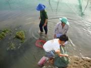 Thị trường - Tiêu dùng - Nuôi tôm sú kiểu mới ở Ninh Thuận