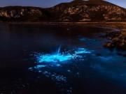 Phi thường - kỳ quặc - Nước biển phát sáng xanh lè bí ẩn ở Australia