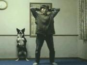 Ảnh động: Động vật còn chăm tập thể dục hơn chúng ta