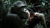 Băng đảng tinh tinh tàn bạo nhất, xé xác khỉ ăn sống