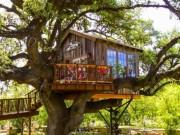 Tài chính - Bất động sản - Nhà tổ chim trên cây 450 tuổi đẹp ngỡ ngàng