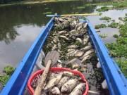 Bình Dương: Cá chết hàng loạt, dân lén lút ướp muối