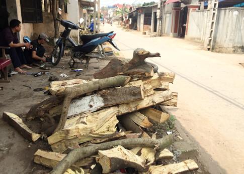 """Hà Nội: """"Đòi"""" lại vỉa hè, chặt luôn cả trăm cây xanh"""