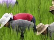 Con số giật mình của LHQ về suy dinh dưỡng ở Triều Tiên