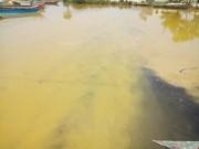 Xuất hiện dải nước màu vàng gây ngứa tại cảng Chân Mây