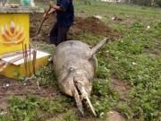 Phát hiện cá lạ nặng gần 1 tạ, chết bên ngôi mộ ven biển