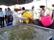 Thị trường - Tiêu dùng - 10 tỉ USD xuất khẩu tôm: Thách thức lớn