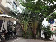 Những căn nhà đặc biệt  ôm trọn vỉa hè  trên phố Hà Nội