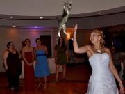 """Cô dâu  """" tung hoa hóa ra mèo """"  trong ngày cưới"""