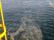 Xuất hiện vệt nước lạ tại Khu kinh tế Nghi Sơn