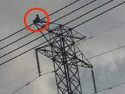 Thanh niên cố thủ gần 10 tiếng trên cột điện cao thế