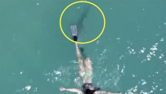 Cá mập bám sát gót cô gái mặc bikini lặn biển ở Mỹ