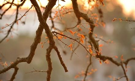 Mê hoặc chiều dát vàng Hồ Gươm - 11
