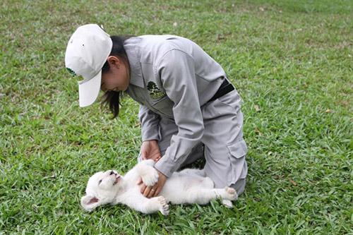 Vinpearl Safari đón nhiều thú non quý hiếm chào đời - 1