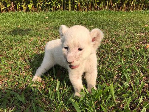 Vinpearl Safari đón nhiều thú non quý hiếm chào đời - 2