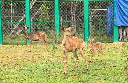 Vinpearl Safari đón nhiều thú non quý hiếm chào đời - 4