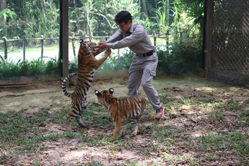 Vinpearl Safari đón nhiều thú non quý hiếm chào đời - 5