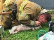 Lính cứu hỏa hô hấp cứu chó đang nguy kịch gây xúc động