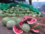 Thị trường - Tiêu dùng - Hàng loạt nông sản Việt 'chết' vì Trung Quốc ngừng mua