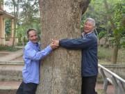 Cận cảnh  cụ  sưa 400 tuổi được đại gia gỗ săn đón ở Bắc Ninh