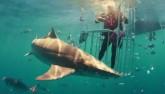 Video đập hộp Samsung Galaxy S8 ngay trước hàm cá mập