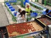 """Tài chính - Bất động sản - Lấn cấn gói vay 100 ngàn tỷ cho nông nghiệp: Doanh nghiệp lo không dễ """"xơi"""""""