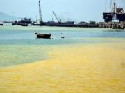 Vì sao tảo nở hoa liên tục xuất hiện ở vùng biển Huế?