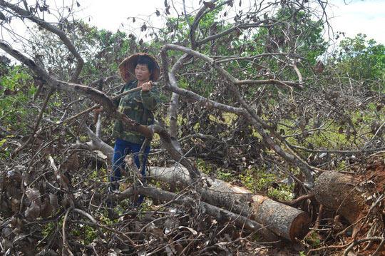 Ngày mai xét xử vụ xả súng kinh hoàng ở Đắk Nông - 2