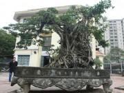 Tin tức trong ngày - Doanh nhân muốn đổi 8 lô đất ở Thủ đô lấy cây sanh cổ nhất châu Á