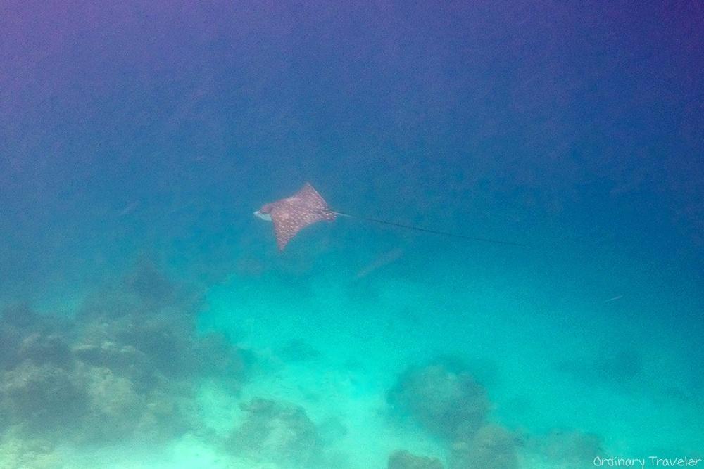 """Tất tần tật kinh nghiệm để """"lạc trôi"""" đến El-Nido - hòn đảo đẹp nhất thế giới - 7"""