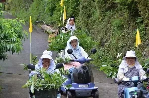 Nhờ bán...lá cây, các cụ bà Nhật Bản kiếm được 52 tỷ đồng/năm - 10