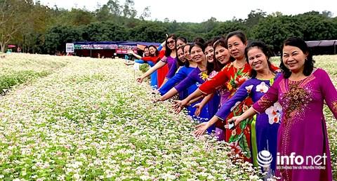 Ngỡ ngàng vẻ đẹp mê hồn của vườn hoa tam giác mạch ở miền Tây xứ Nghệ - 11