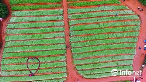 Ngỡ ngàng vẻ đẹp mê hồn của vườn hoa tam giác mạch ở miền Tây xứ Nghệ - 13