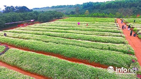 Ngỡ ngàng vẻ đẹp mê hồn của vườn hoa tam giác mạch ở miền Tây xứ Nghệ - 3