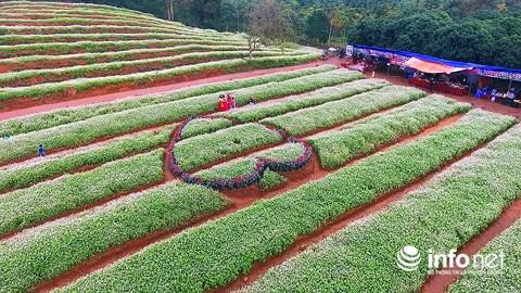 Ngỡ ngàng vẻ đẹp mê hồn của vườn hoa tam giác mạch ở miền Tây xứ Nghệ - 2